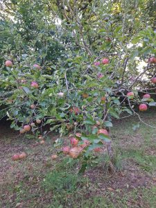 Permaculture fruits