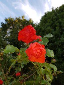 Permaculture fleurs